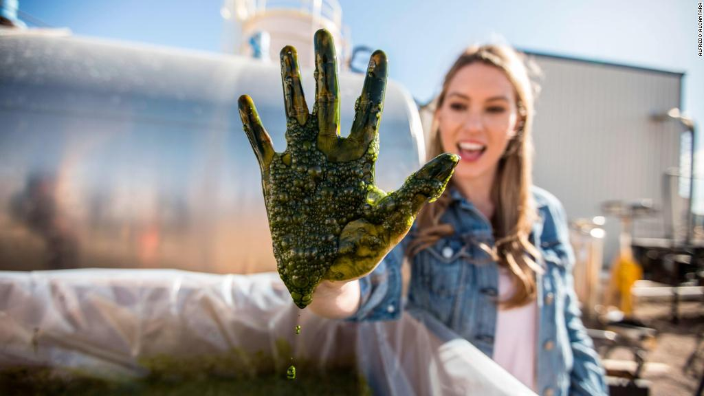 Is algae the food of the future?